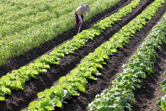 農業の労務管理